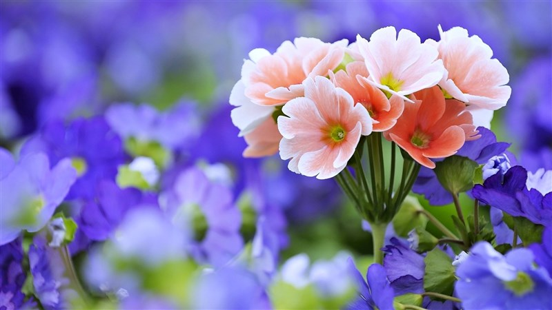 54 Flower Bavaria Germany Garden Nature Spring Bouquet Wallpaper