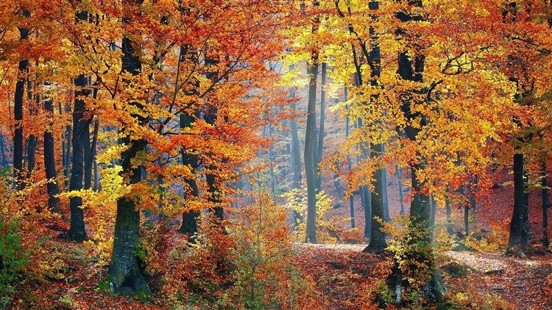 Colorful Woods Landscape HD Wallpaper