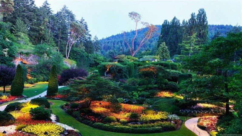 Beautiful Park Landscape View
