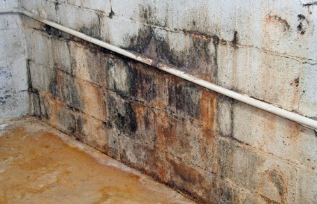 Molds on the wall - Techcon Inspection Services mold inspection Long Island NY