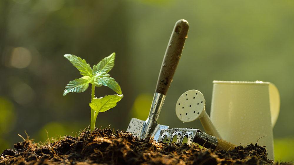How Many Seeds Do You Need to Grow a Plant?