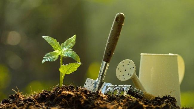 Seeds Do You Need to Grow a Plant