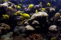 4-17-07-aquarium.jpg