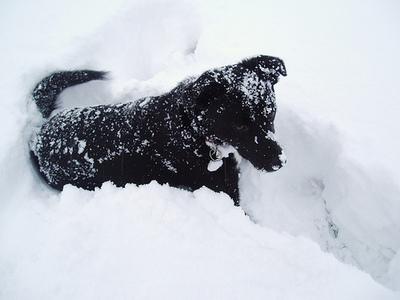 bruno-snow.jpg