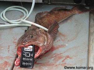 cod-phone.jpg