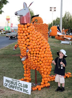 orange-kangaroo.jpg
