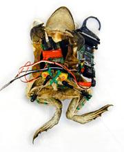 dead-frog-server.jpg