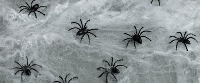 fake-spider-web.jpg
