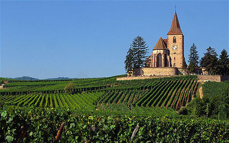french-vineyard.jpg