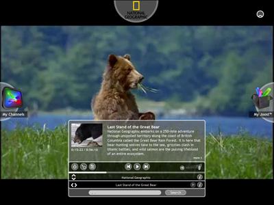 joost-bear.jpg