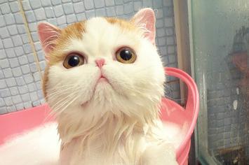 kitten-in-a-bucket.jpeg