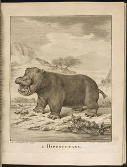 library-hippos.png