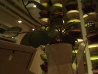 midori-blogging-plant.jpg