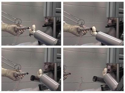 monkey-robot-arm-marshmallow-moment.jpg