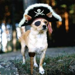 pirate-dog.jpg