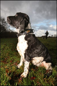 retrieva-gps-dog-collar.jpg