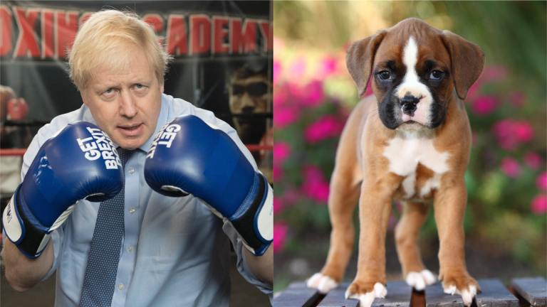 Replace Boris Johnson with puppies with Pawry-Party tool
