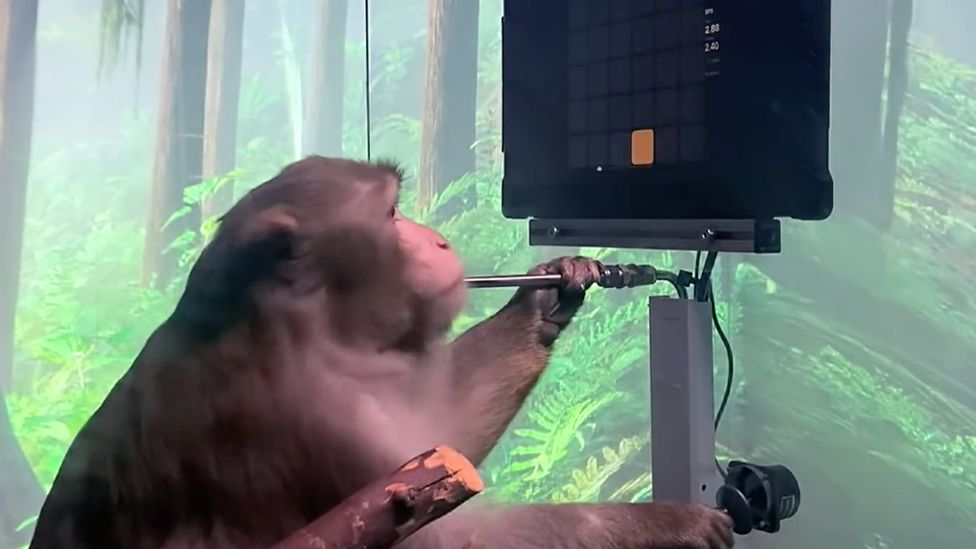 Tech Digest round up: Elon Musk firm shows monkey playing Pong with mind