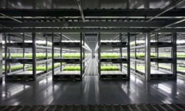farm01-600x360