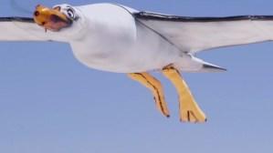 Nivea cria gaivota que defeca protector solar