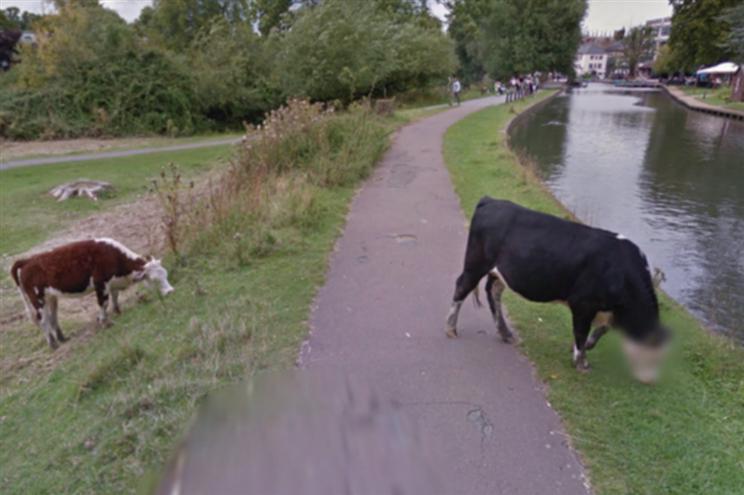 Google Street View protege identidade de uma… vaca!