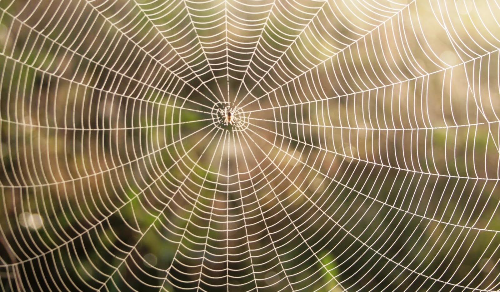 Roupa feita de teia de aranha irá chegar ao mercado