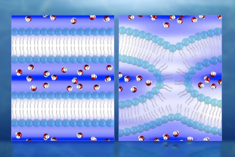 First direct 3D maps of water during cell membrane fusion