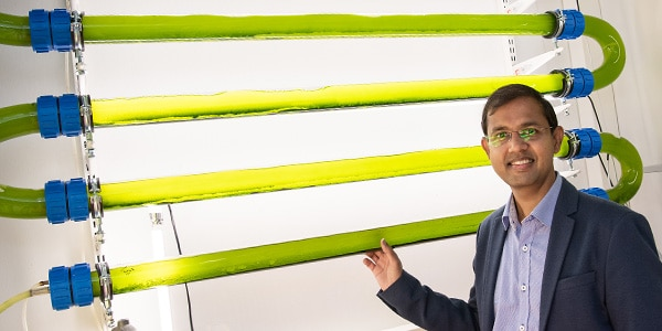 Microalgae clean wastewater and produce bioenergy