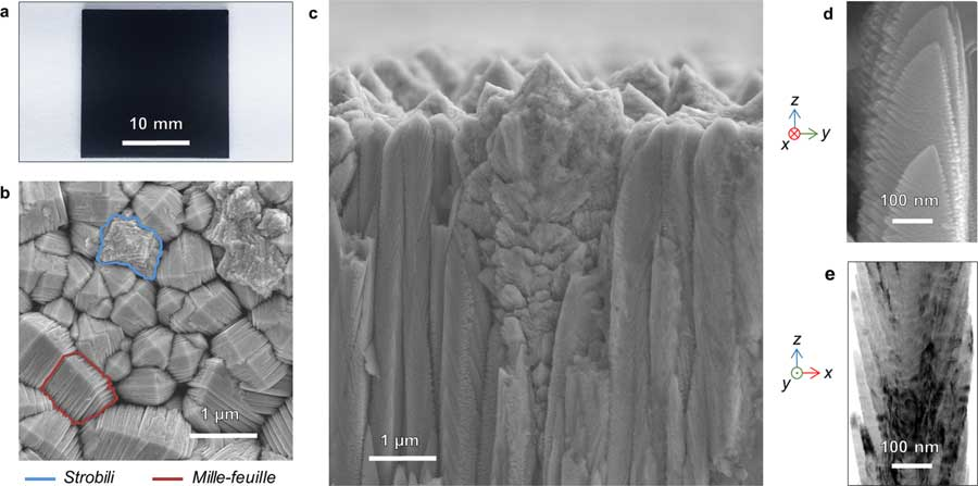 Shape-changing element holds key to anti-bacterial coating