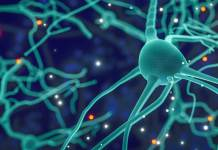 How neurons interact between brain areas?