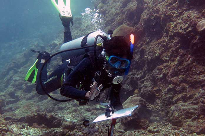 Under water survey being conducted for parrotfish