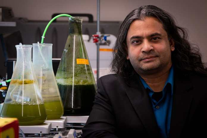 University of Utah chemical engineering assistant professor Swomitra Mohanty, pictured with beakers of algae, is part of a team that has developed a new kind of jet mixer for turning algae into biomass that extracts the lipids with much less energy than the older extraction method. It is a key discovery that now puts this form of energy closer to becoming a viable, cost-effective alternative fuel. Credit: Dan Hixson/University of Utah College of Engineering