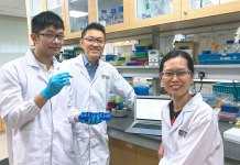 From left: Mr Toh Yi Long, Associate Professor Alexandre Chan and Assistant Professor Lau Aik Jiang are members of the team that found clinically relevant factors which predispose patients to chemobrain. Credit: National University of Singapore