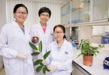 A research team from the National University of Singapore, comprising Dr Siew Yin Yin (left), Dr Neo Soek Ying (centre) and Associate Professor Koh Hwee Ling (right), uncovered anticancer properties in six tropical medicinal plants. Credit: National University of Singapore