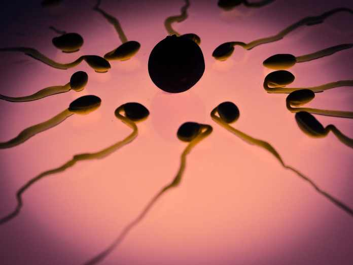 Pregnancy stress linked to lower sperm count in male offspring