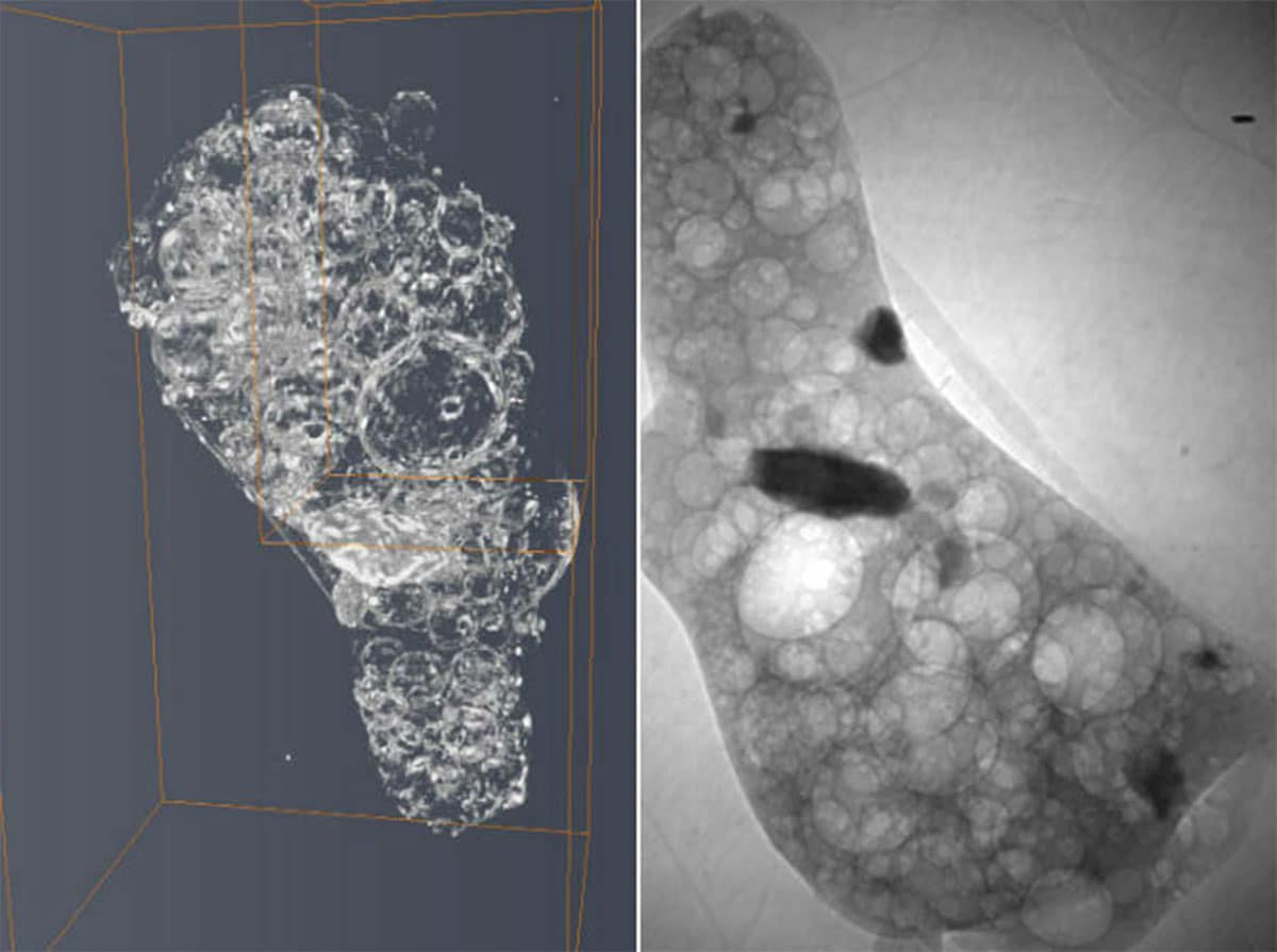 New research identifies Fukushima reactor material in the environment