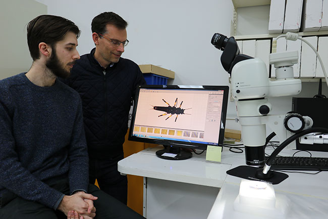 Brodie Foster (L) and Prof Jon Waters (R) examining the Maungatua stonefly
