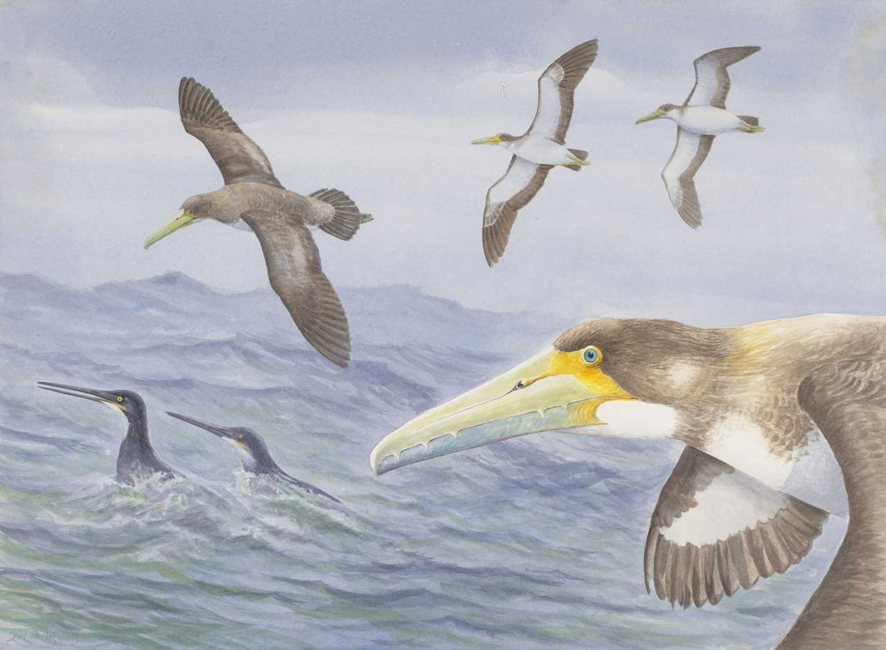 Scientists discover one of world's oldest bird species
