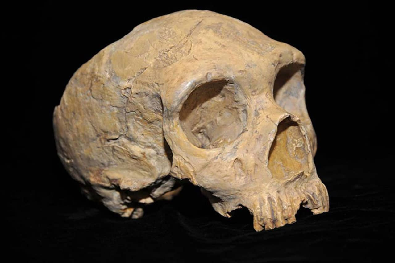 Deadly human diseases may have caused the Neanderthal extinction