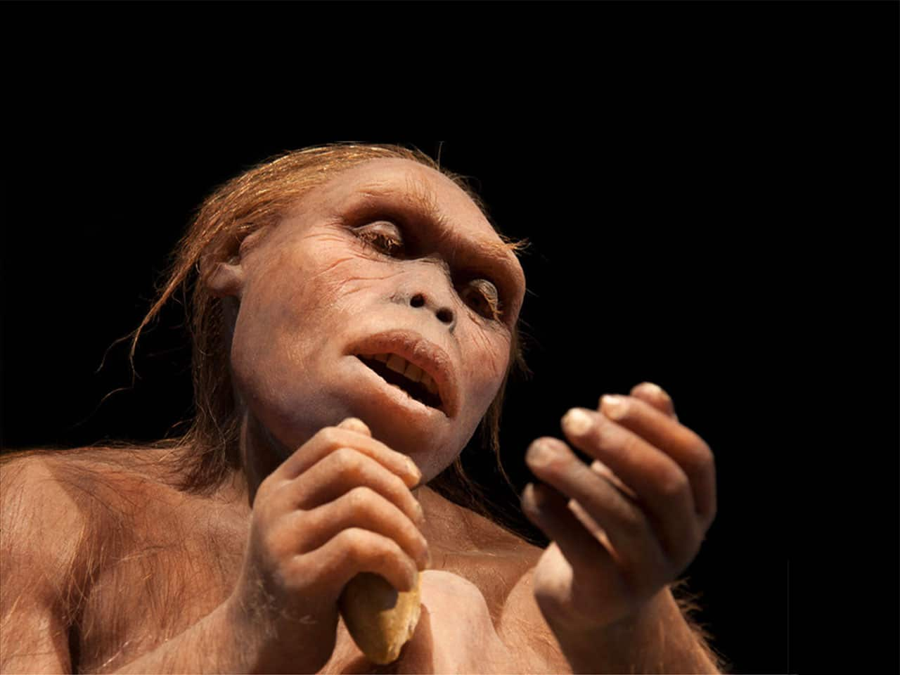 Our ancients were able to eat hard plant foods without damaging their teeth