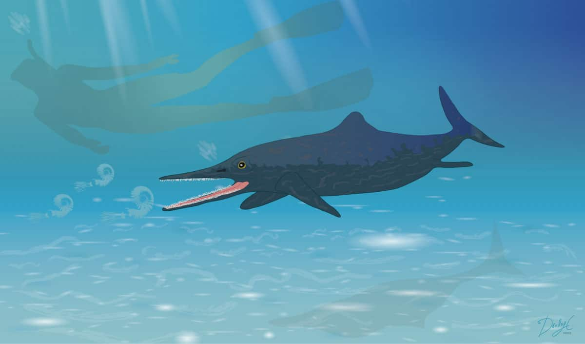 New species of Ichthyosaur discovered
