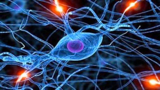 brain-cells20141205151401_l-624x351