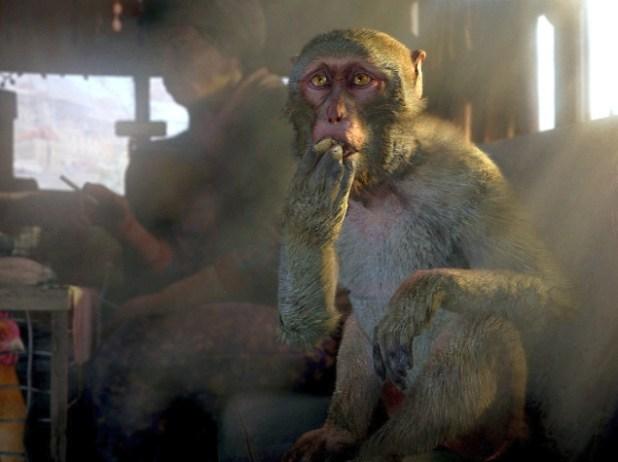 far_cry_4_monkey.jpg