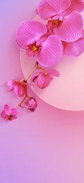 redmi-k20-pro-pinkflower-wall-TechFoogle