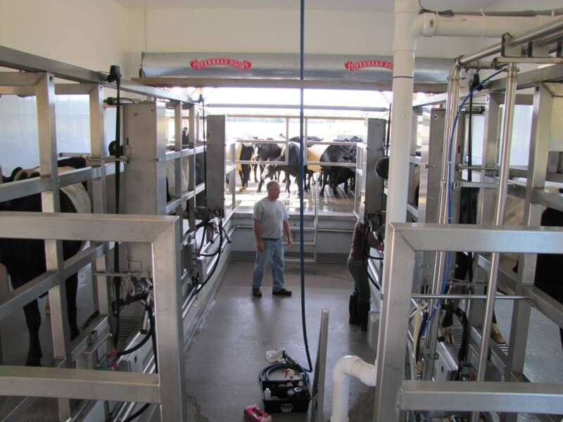 SideOpening Dairy Parlor  AutoTandem Milking Parlor