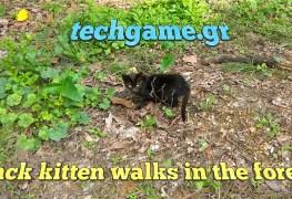 black kitten forest