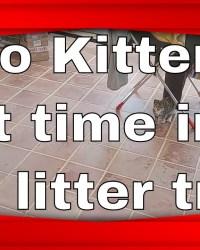 kitten cleo 1st time ammo