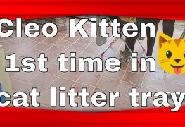 kitten cleo 1st time ammo