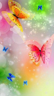 butterfly colorful wallpaper