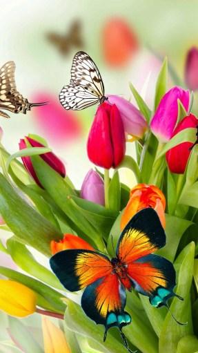 butterfly flower image